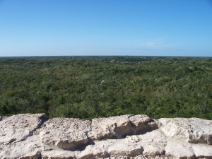Yucatan jungle
