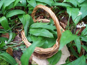 basket of wild garlic
