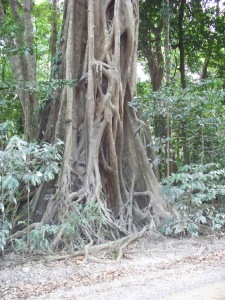 jungle tree roots