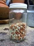 jar of pea seed