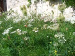 Wild Flower Meadow Corner