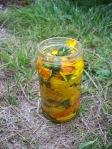 calendula in a jar