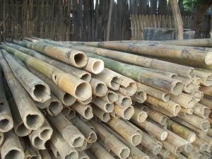 Large diameter bamboo poles