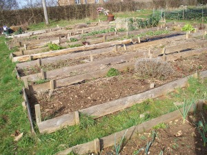 Well proportioned raised beds