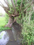Willows & Stream at Brook End