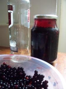 making elderberry tincture