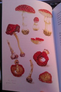 Fly Agaric by Fiona Owen