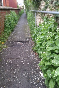 urban alley way edged with wild hedge garlic