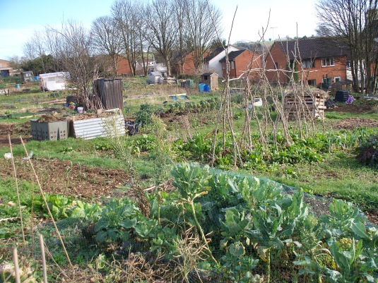 allotment scene