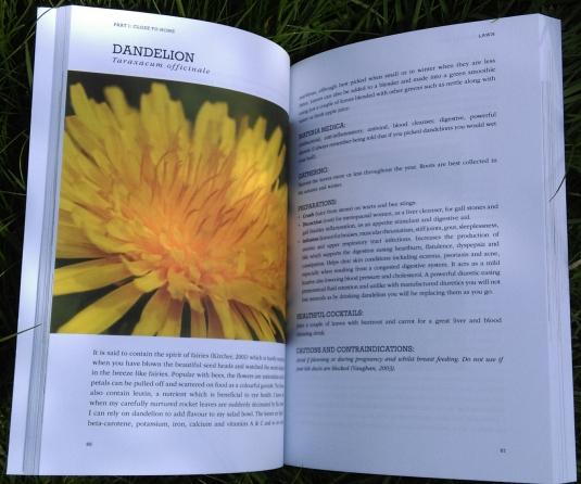 dandelion page - The Medicine Garden